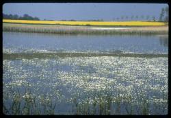 [Un étang à Villars-les-Dombes]