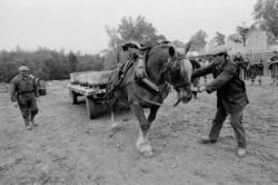 [11e Fête du cheval de Morancé (1991)]