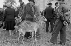 [Foire de Nervieux (1950)]
