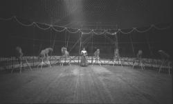Numéro de cirque avec panthères