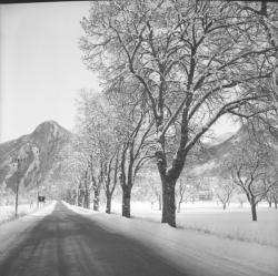 [La Neige dans les Alpes-de-Haute-Provence]