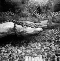 [Pavillon des crocodiles du Parc de la Tête-d'Or]