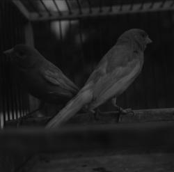 Parc Ornithologique de la Dombes