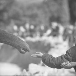 Elephants du parc de la Tête d'Or