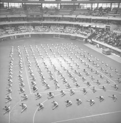Gymnastique au sol ; Trampolines ; les Barres fixes