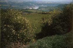 [Les Monts-d'Or (Rhône)]