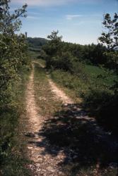 [Sentier de promenade des Monts-d'Or]