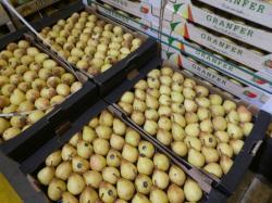 Fruits en vente au marché de gros de Lyon-Corbas