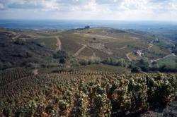 [Vignobles du Beaujolais (Rhône)]