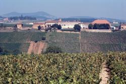 [Exploitation viticole du Perréon (Rhône)]