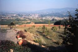 [Paysage du Beaujolais (Rhône)]