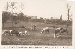 Fontaines-Saint-Martin (Rhône) : Pré des Guettes. Le David