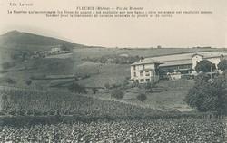 Fleurie (Rhône) : Pie de Rémont