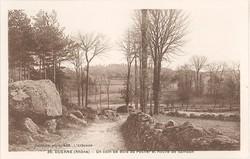 Duerne (Rhône) : Un coin de Bois au Pêcher et Roche de Samson