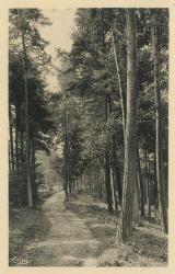 Duerne (Rhône) : Un sentier à travers les bois. Au moulin du Pêcher