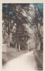 Claveisolles (Rhône) : Sous-bois de la Corcelle
