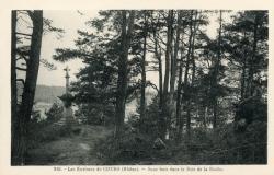 Les Environs de Cours (Rhône) : Sous-bois dans le bois de la Bûche