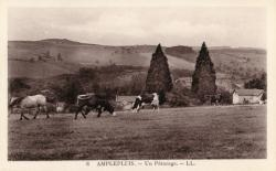 Amplepuis (Rhône) : Un pâturage