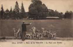 Lyon : Parc de la Tête d'Or ; Le Parc aux Daims