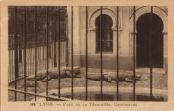 Lyon : Parc de la Tête-d'Or ; Crocodiles