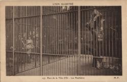 Lyon : Parc de la Tête-d'Or ; Les Panthères
