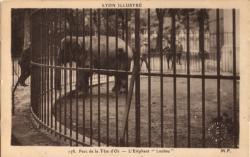 """Lyon illustré : Parc de la tête d'Or ; l'Éléphant """"Loulou"""""""