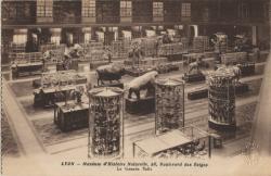 Lyon : Muséum d'Histoire Naturelle, 28, Boulevard des Belges : La Grande Salle.