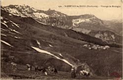 St-Gervais-les-Bains (Hte-Savoie) : Pâturage de Montagne
