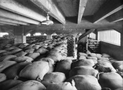 [Port Rambaud : entrepôt de stockage de sac de sel (?)]