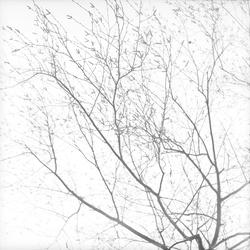 [Les branches d'un arbre]