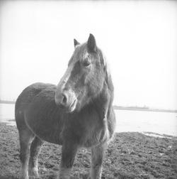 [Un cheval]