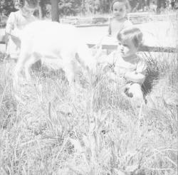[Trois petites filles et le chevreau]