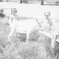 [Deux petites filles et le chevreau]