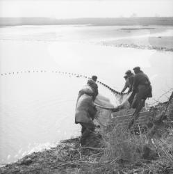 [Les pêcheurs forcent pour rassembler le filet]