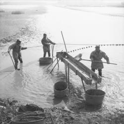 [Le pêcheur avec son arvaux jette les premiers poissons dans la gruyère]