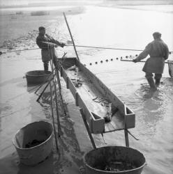 [Le pêcheur retourne pêcher les carpes, brochets et autres]