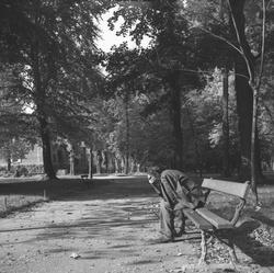Un homme seul sur un banc au Parc de la Tête d'Or