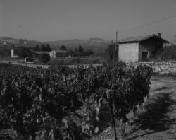 Vendanges en Beaujolais et en Bourgogne