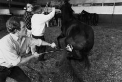 [Marquage des chevaux de l'Escadron de Saumur au Parc de Miribel-Jonage]