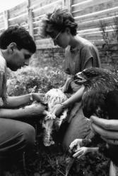 [Centre de soins pour animaux sauvages de l'Ecole nationale vétérinaire de Lyon]