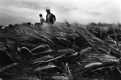 """[Manifestation agricole """"Optimum grandes cultures"""" à Satolas]"""