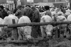 [Foire agricole de Beaucroissant (1988)]