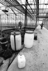 [Centre horticole de Cibeins à Misérieux (Ain)]