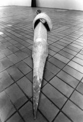 """[Espace lyonnais d'art contemporain (Elac). Exposition """"4 artistes polonais, à l'Elac"""" (1er volet)]"""