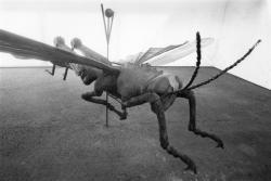 [1re Biennale d'art contemporain de Lyon (1991). Le coléoptère, de Jean-François Gavoty]
