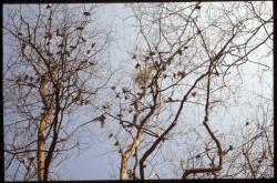 Pigeons sur les branches d'un arbre