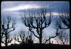 Quai Saint Antoine : arbres