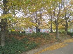 [Parc-cimetière du Grand-Lyon à Bron : le parc aux couleurs d'automne]