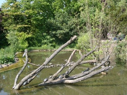 Tortues sur un tronc d'arbre au soleil