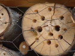 Urban bees à Gerland